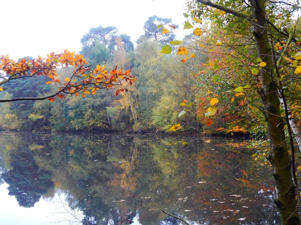 Heath Pond Crowthorne to Blackwater