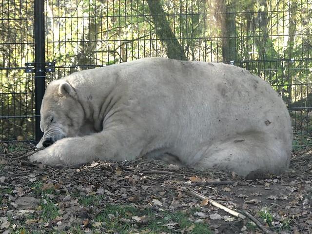 Eisbär Felix, Leeuwarden