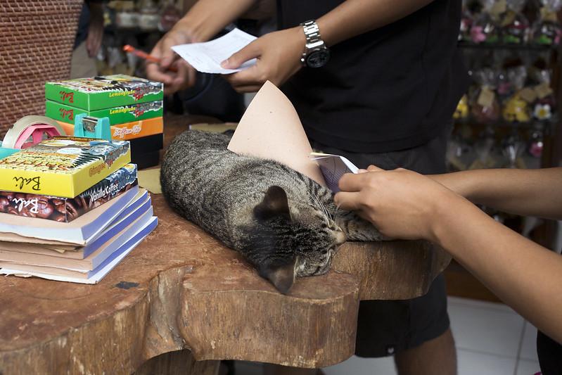 The assistant cat at souvenir shop in Bali