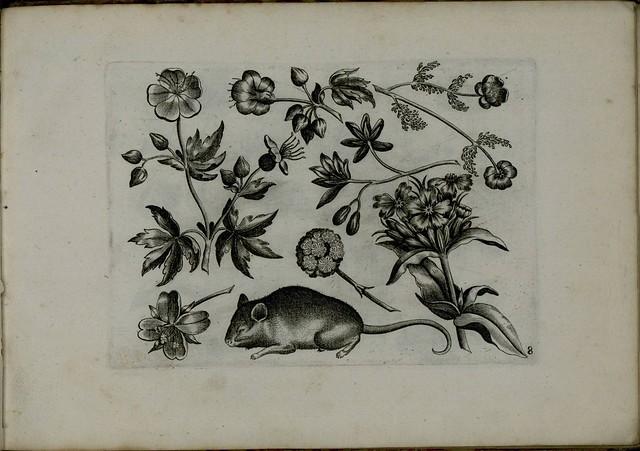 Viridarium Novum f
