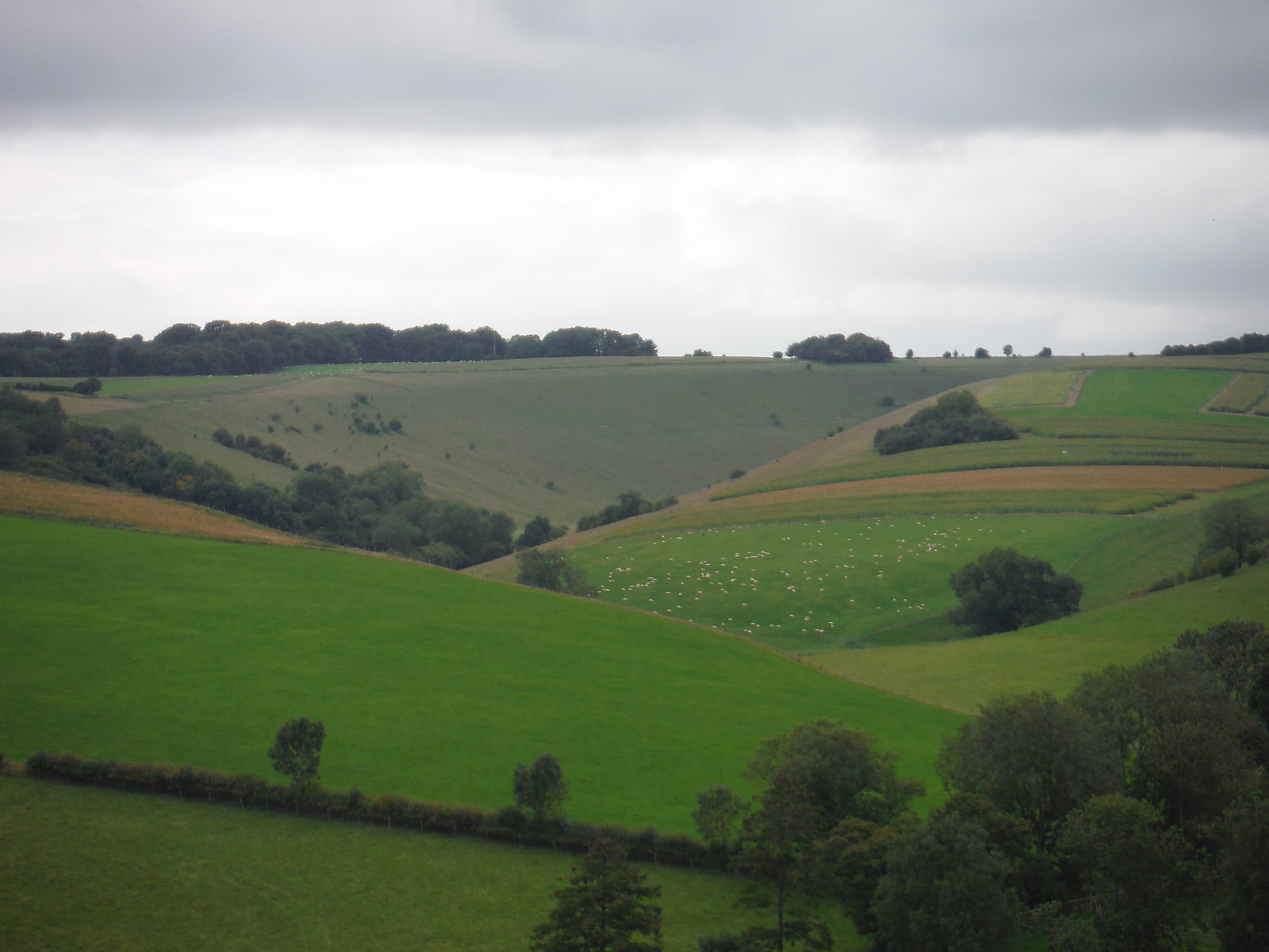 Middle Down, Backview from near Ebbesbourne Wake SWC Walk 250 Tisbury Circular via Alvediston