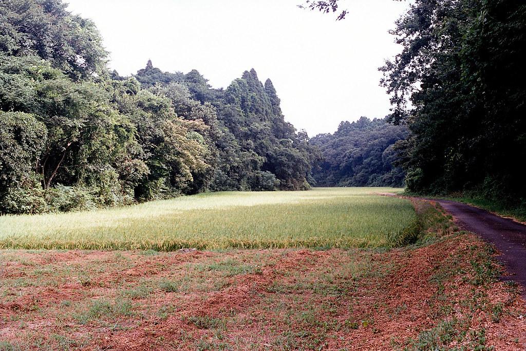 """稻田 芝山千代田 Shibayama-Chiyoda 2015/08/11 機場旁邊其實是一大片的稻田,大概延伸 2、3 公里遠。  Nikon FM2 / 50mm FUJI X-TRA ISO400  <a href=""""http://blog.toomore.net/2015/08/blog-post.html"""" rel=""""noreferrer nofollow"""">blog.toomore.net/2015/08/blog-post.html</a> Photo by Toomore"""