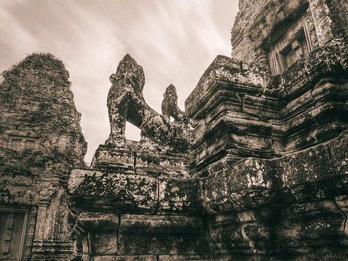Lions of Pre Rup