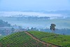 Nini Hill, Malabar by iqronaldo