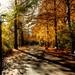 Herbstmorgen im Stadtpark - Autumn morning in city park by vampire-carmen