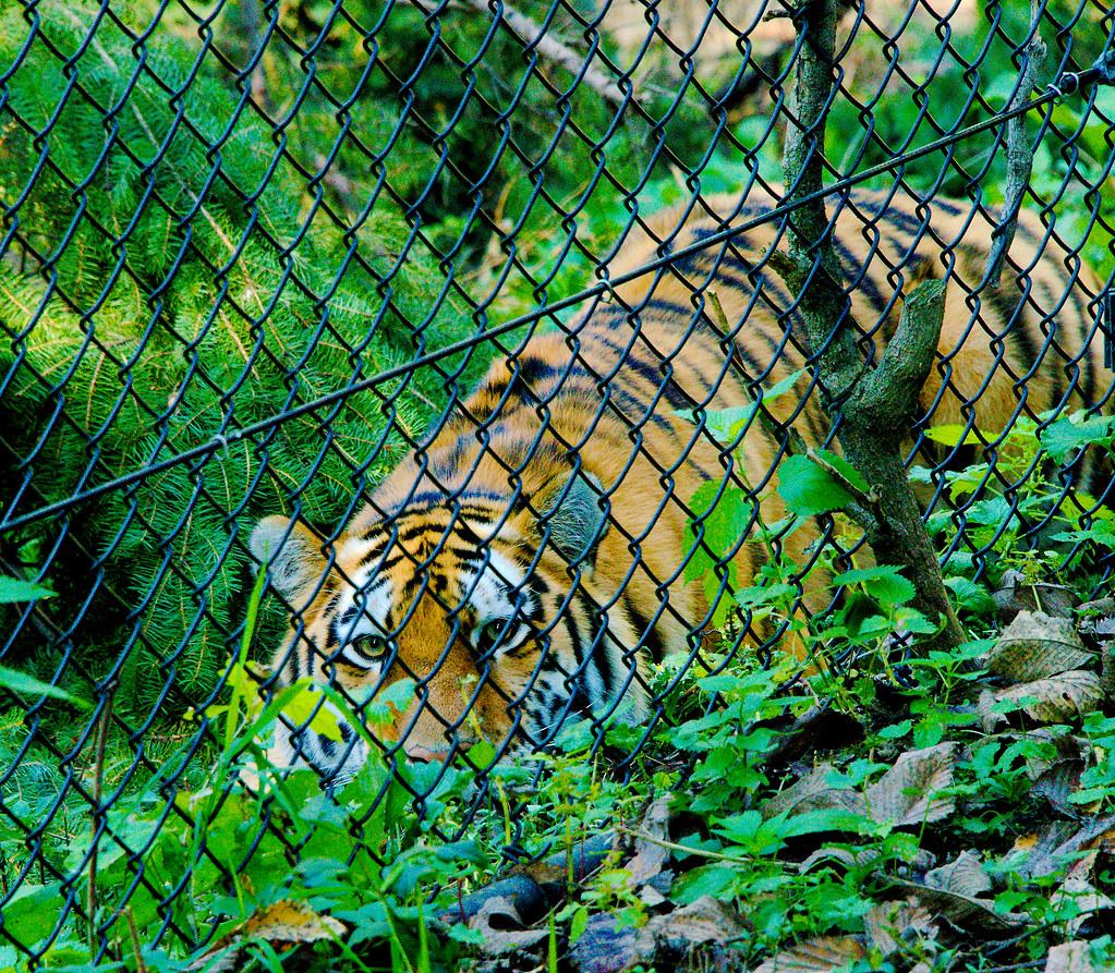 MN Zoo_28