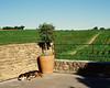 Vineyard Dog: Domaine de la Solitude / EXPLORED NOVEMBER 18, 2015