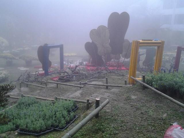 24473霧裡看花