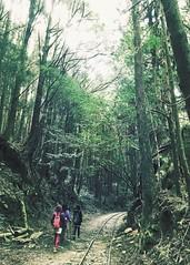 2015_11 阿里山_特富野古道 63