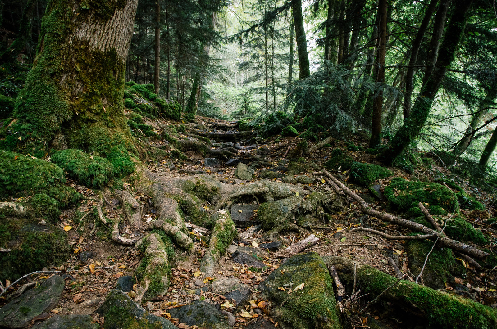 Grande traversée du Morvan - Le long de la vallée du Serein