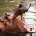 Hungry Hungry Hippo by Brandon_Hilder