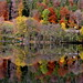 Autumn reflection by echumachenco