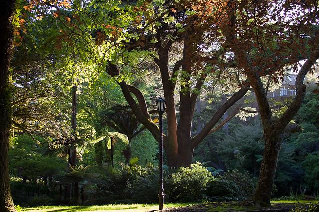 Narnia, Botanical Gardens, Wellington, Nikon D40, AF-S DX Nikkor 35mm f/1.8G