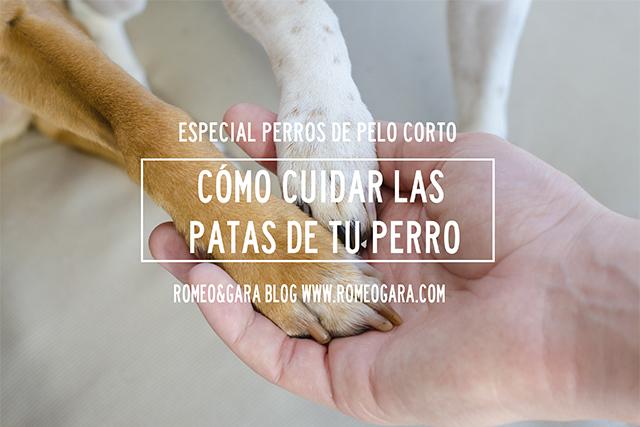 Cómo cuidar las patas de tu perro