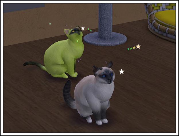 012crazycats