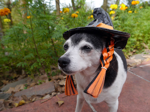 2015-09-22 - Mags Witch - 0018 [flickr]
