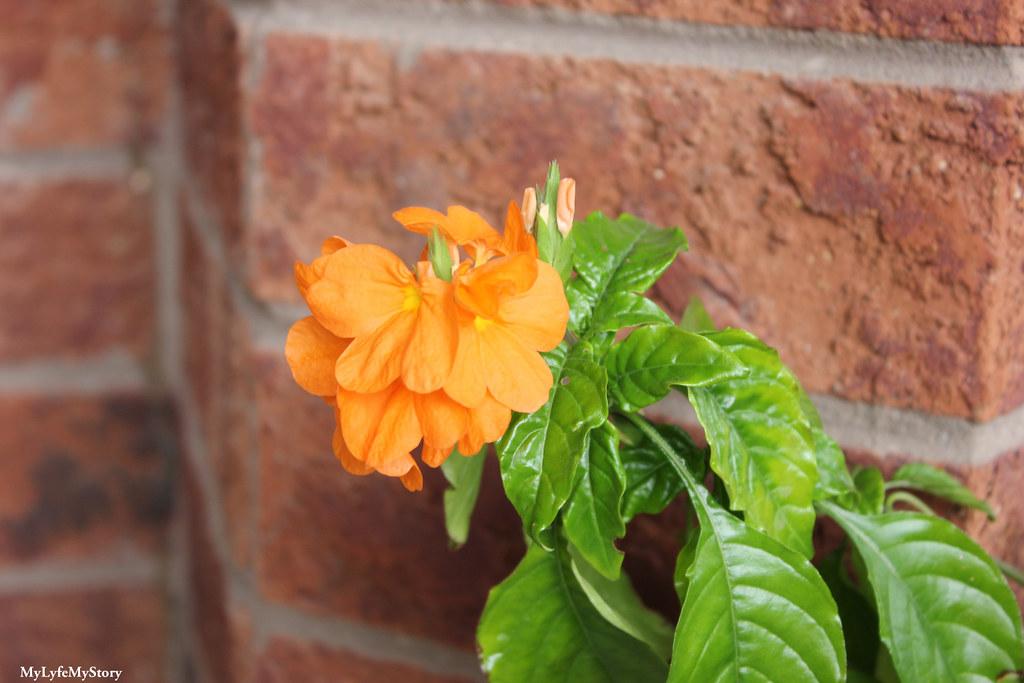 My Garden 2015 (2)