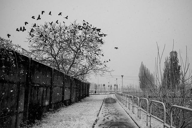 winter scene with a, Fujifilm FinePix X100