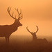 Misty sunrise by Hammerchewer