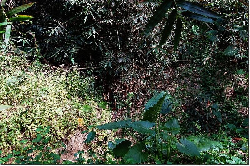 竹子赤山南坡起登點
