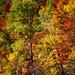 Feuillus d'automne...!!! by Denis Collette...!!!