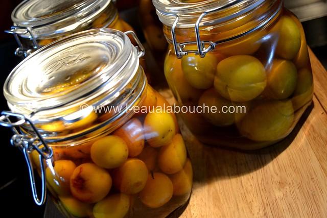 Mirabelles au Pfümli-Eau de Vie de Prune © Ana Luthi Tous droits réservés 0018