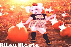 HeirloomCutestPumpkin