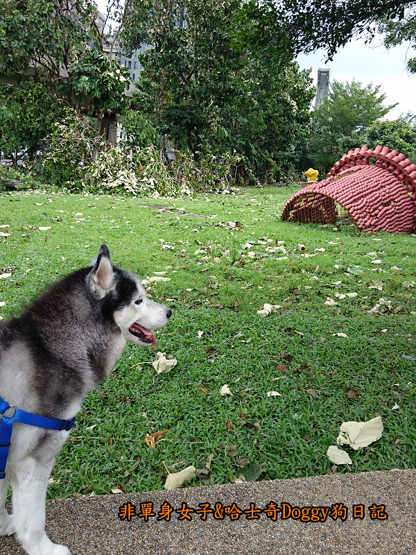 Doggy颱風25