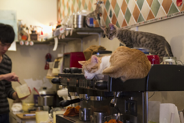 貓圖咖啡 CAT.jpg cafe