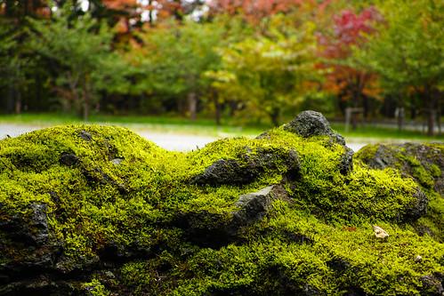 苔むした岩と紅葉