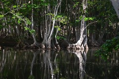 swamp trees - doubled!