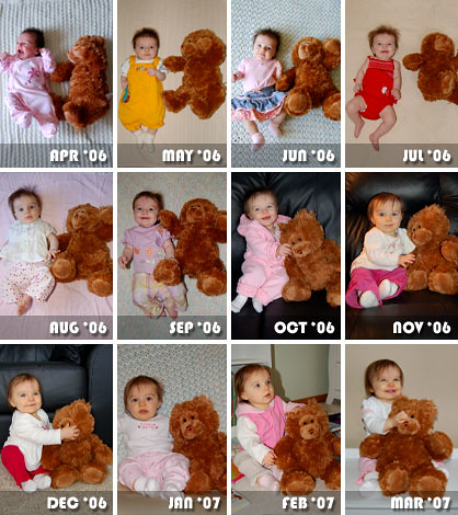 A Year of the Bear