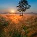 Camino al amanecer by DRGfoto