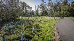 Tolt-MacDonald Park