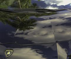 LAMBORGHINI Palms and Sky | 161127-1626-jikatu