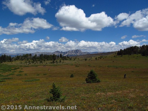 Hiking across the grassy top of Lava Mountain, Shoshone and Bridger-Teton National Forests, Wyoming