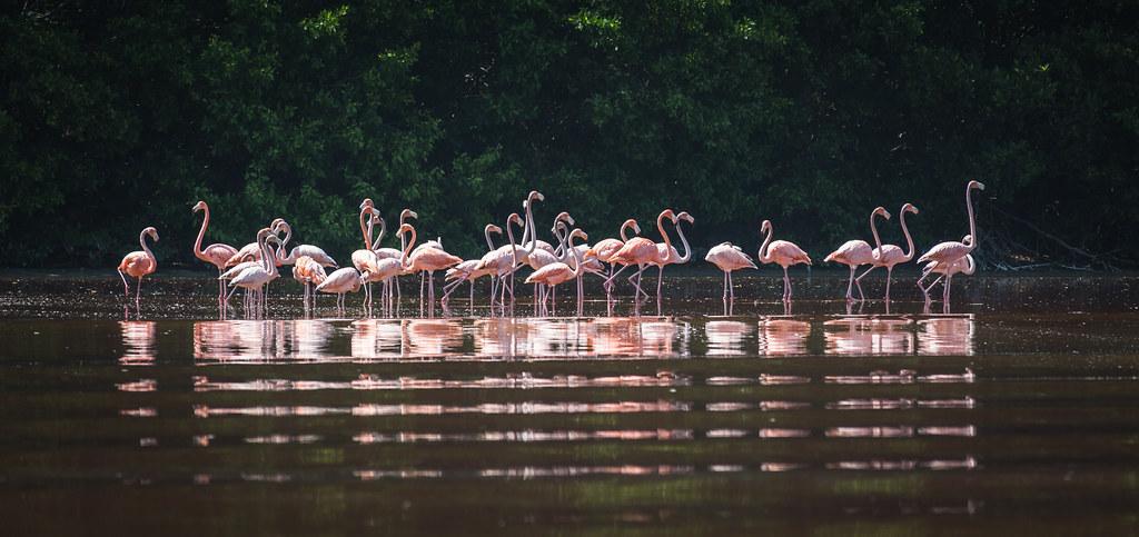 Ría Celestún Biosphere Reserve, Yucatán, Mexico