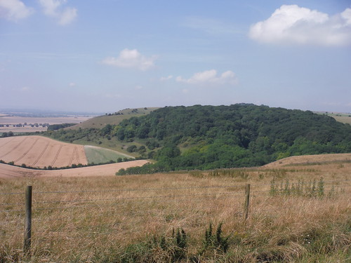 Gopher Wood from Huish Down