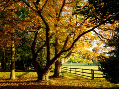 Trees Glowing in the Autumn Sunshine