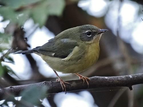 statepark bird fall virginia warbler