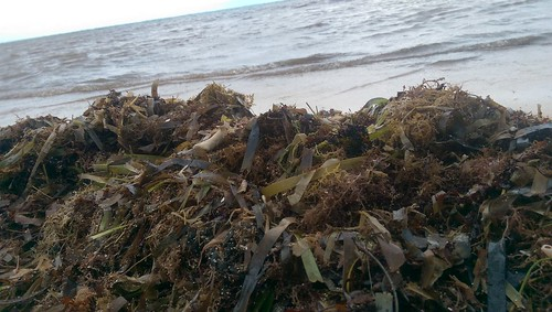 Sargassum in Mexico