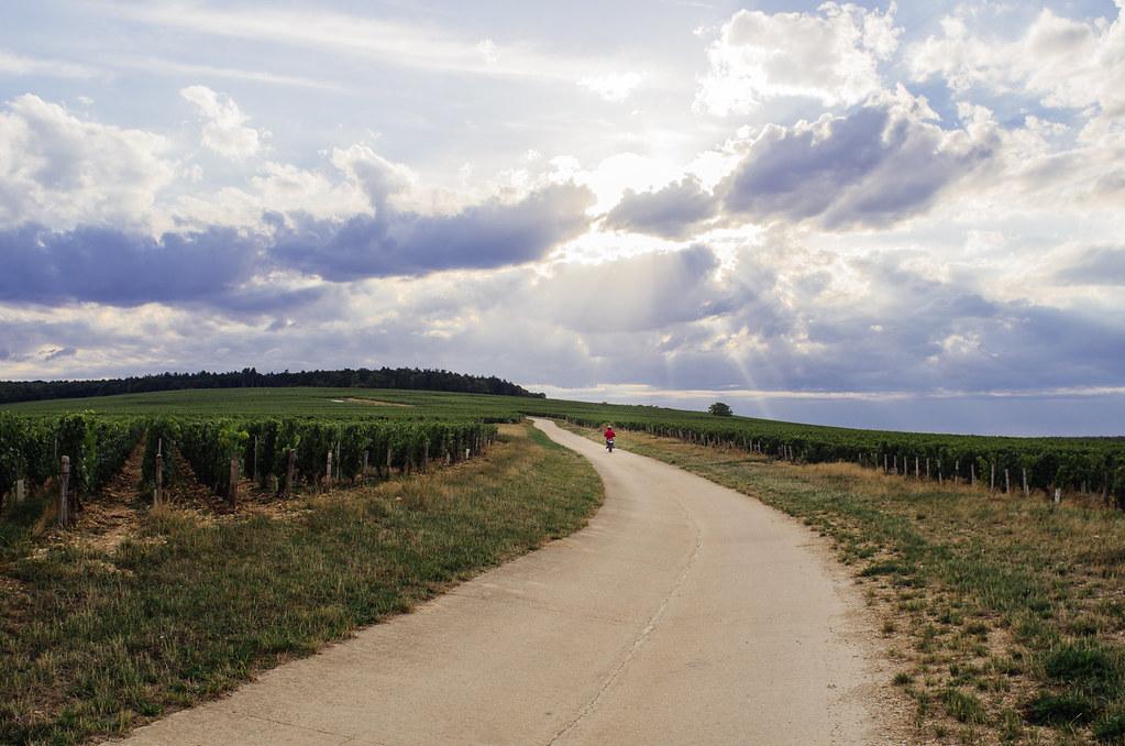 Balade gastronomique dans l'Yonne - juste suivre la route