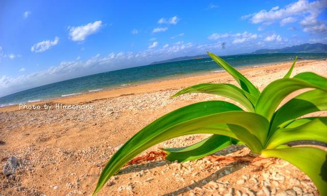 海に出ます!荒れ荒れで写真撮る気になれず。