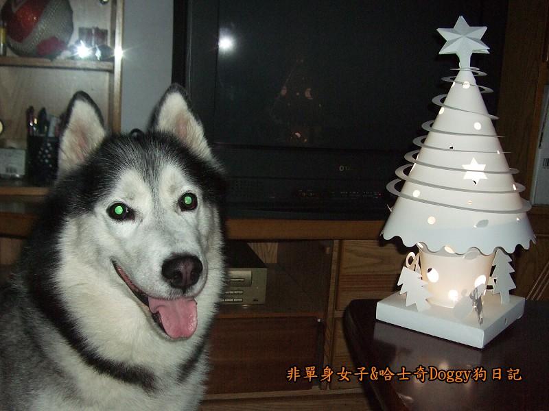 Doggy與紙箱王聖誕樹造型燈飾組13