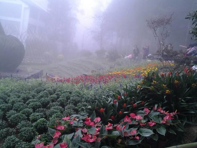 24465霧裡看花