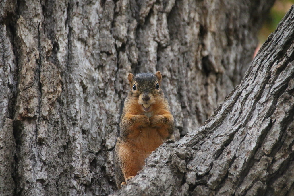 Squirrels in Ann Arbor at the University of Michigan (October 27, 2016)