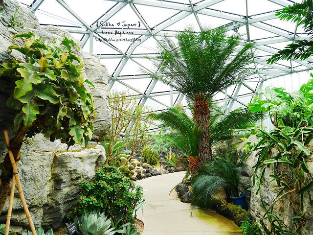 日本東京景點新宿御苑溫室植物 (13)