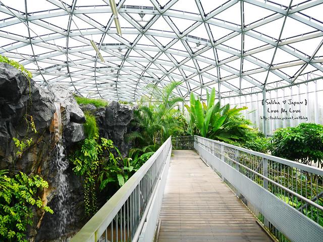 日本東京景點新宿御苑溫室植物 (10)