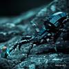 Shelob the Giant Spider by mononoeil