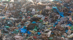 pollution, litter, waste,